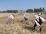 2012.07.07. Arató fesztivál a Tájháznál