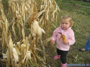 20121029 1168862305 kukoricanap-2012-647 (1)
