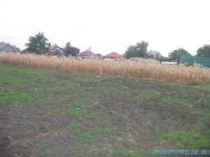 20121029 1375719112 kukoricanap-2012-606 (1)